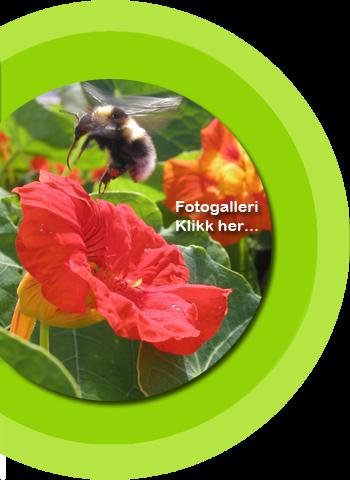 Fargetuva Fotogaller - Hage og natur - Hagearbeid - Trearbeid - Urter - Urtehage - Naturlos - Planter - Blomster